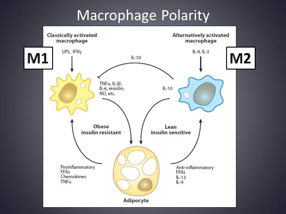 Macrophage Polarity M1 M2