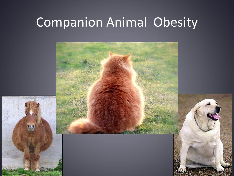 Companion Animal Obesity