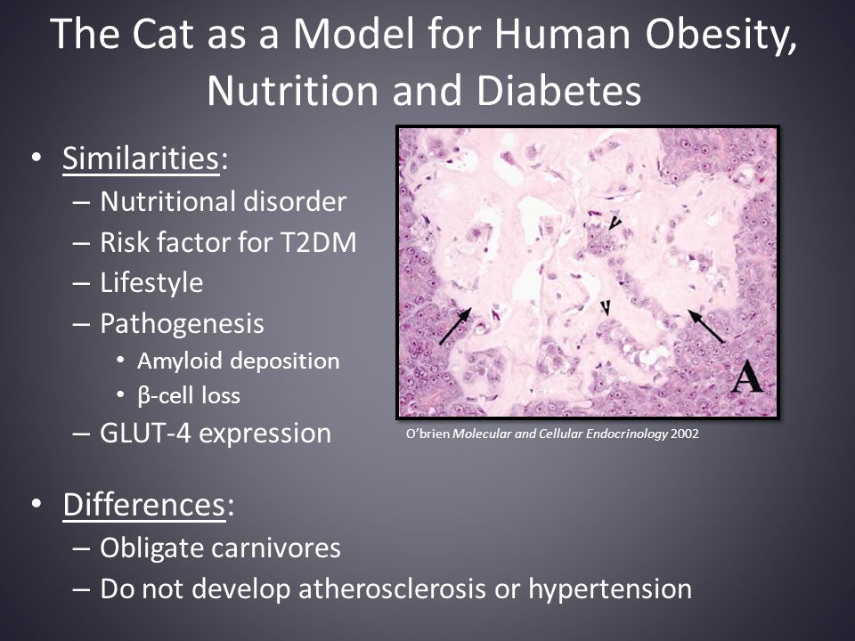 The Cat as a Model for Human Obesity, Nutrition and Diabetes