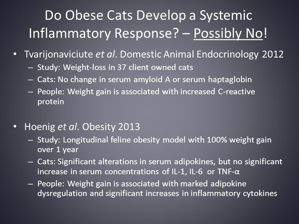 Do Obese Cats Develop a Systemic Inflammatory Response – Possibly No!