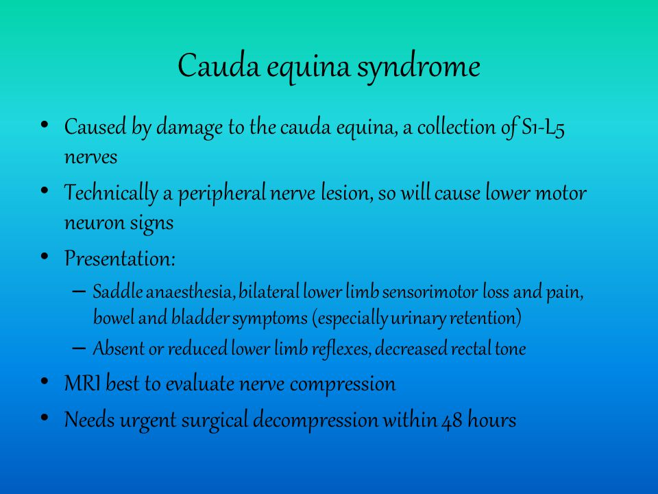 Cauda equina syndrome Caused by damage to the cauda equina, a collection of S1-L5 nerves.