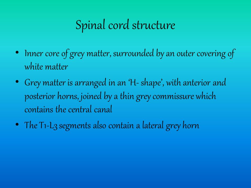 Spinal cord structure Inner core of grey matter, surrounded by an outer covering of white matter.