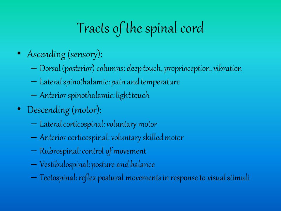 Tracts of the spinal cord