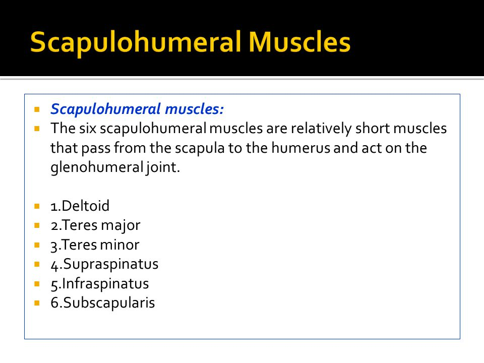 Scapulohumeral Muscles
