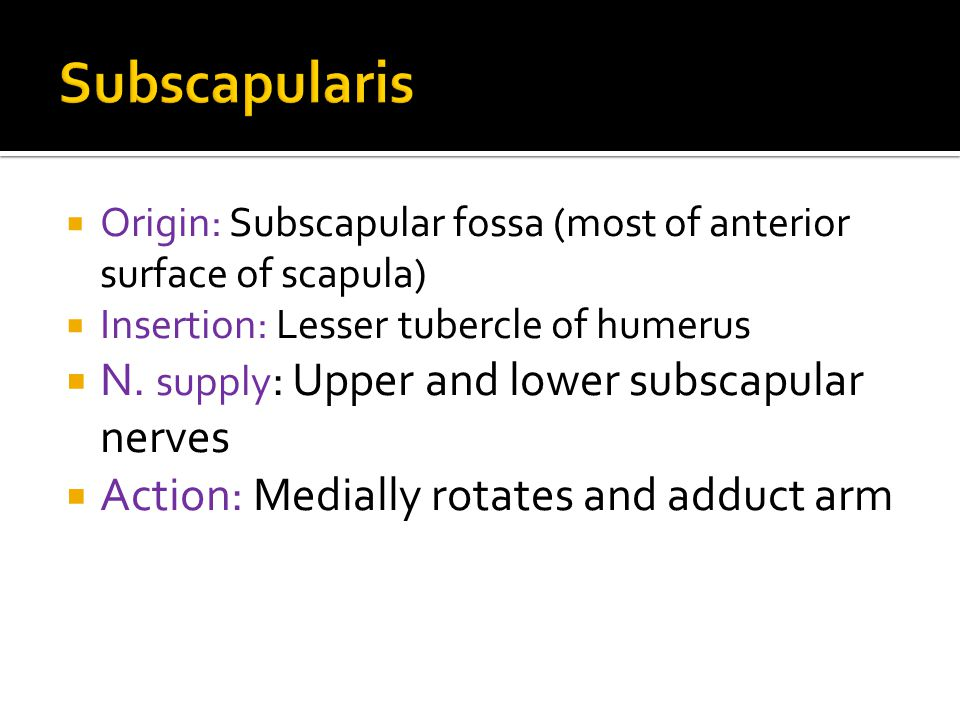 Subscapularis N. supply: Upper and lower subscapular nerves