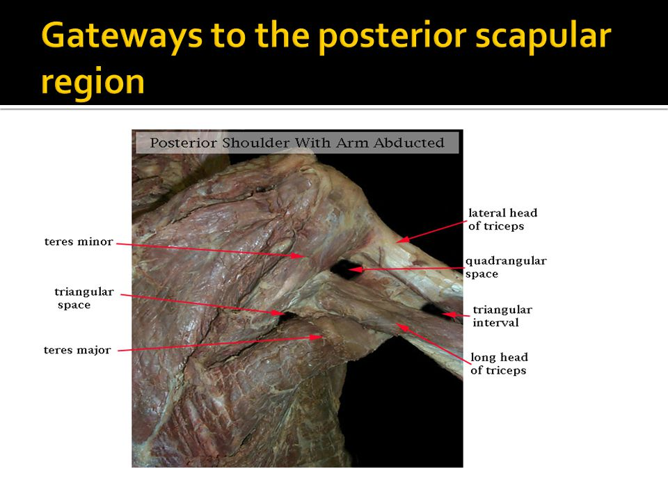 Gateways to the posterior scapular region