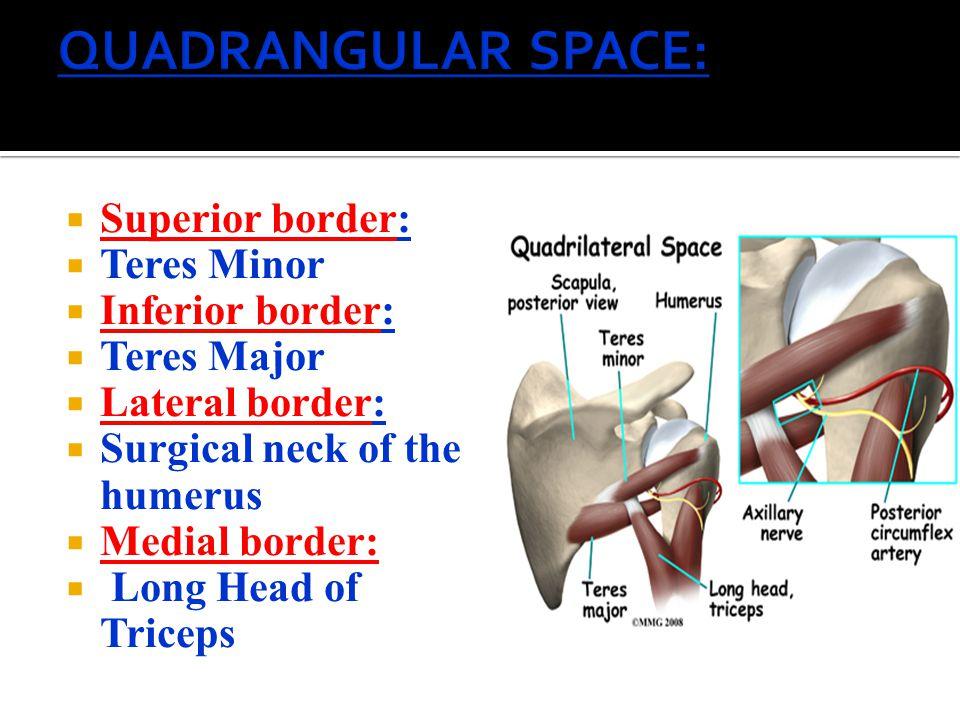 QUADRANGULAR SPACE: Superior border: Teres Minor Inferior border: