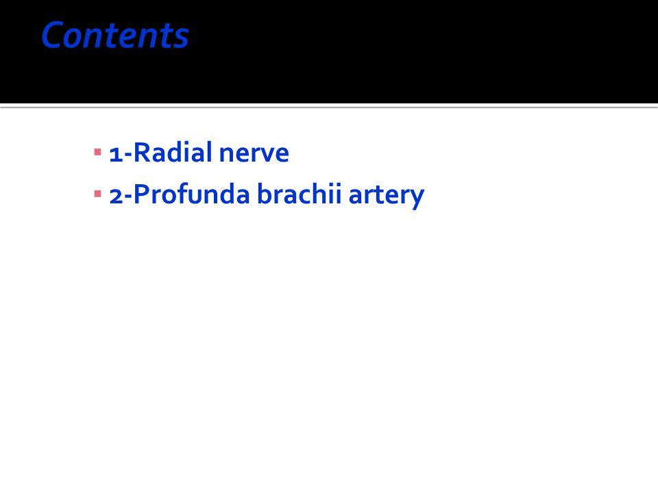 Contents 1-Radial nerve 2-Profunda brachii artery