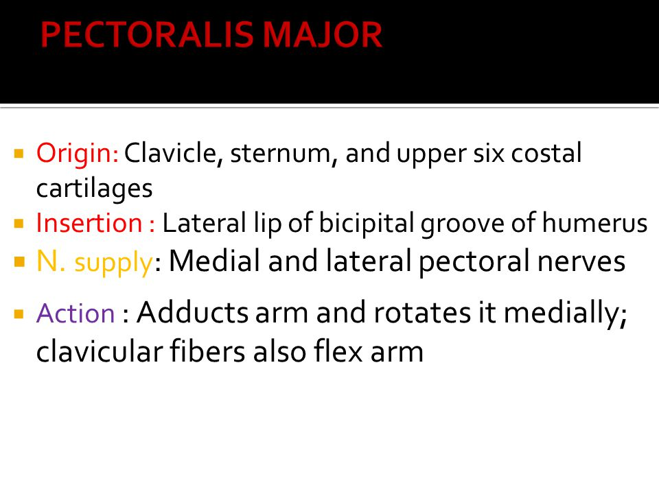 PECTORALIS MAJOR N. supply: Medial and lateral pectoral nerves