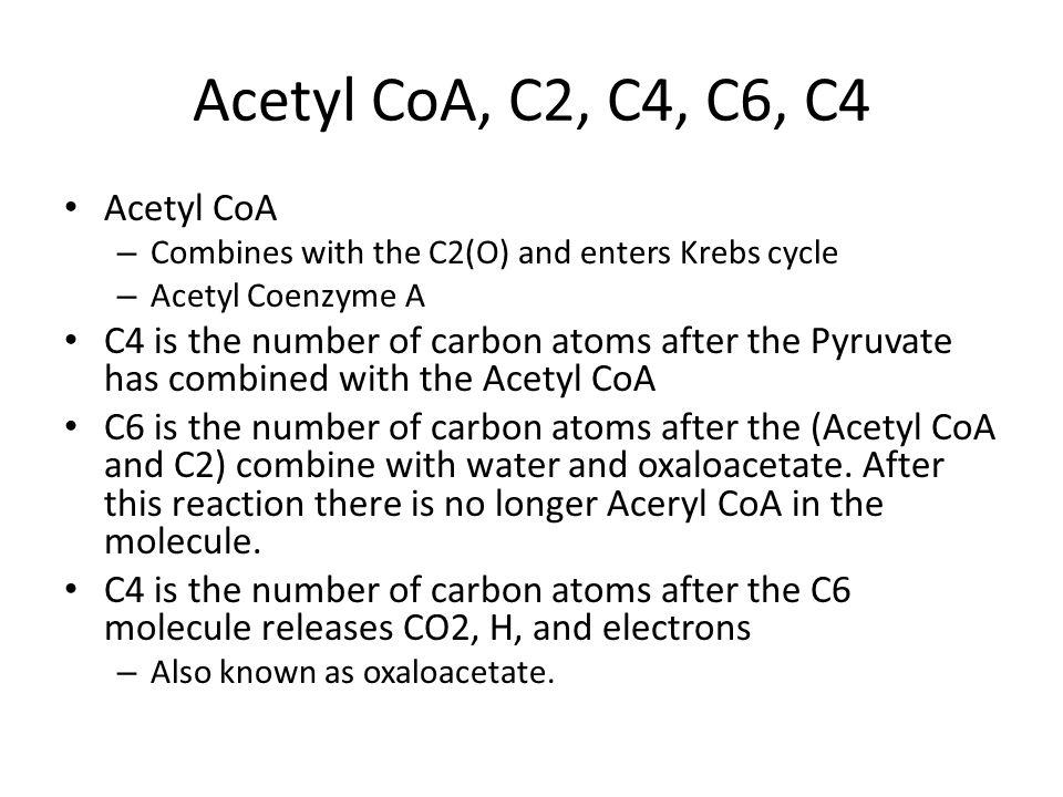 Acetyl CoA, C2, C4, C6, C4 Acetyl CoA
