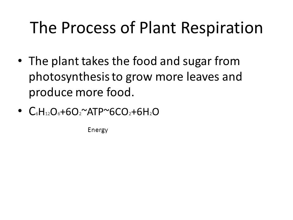 The Process of Plant Respiration