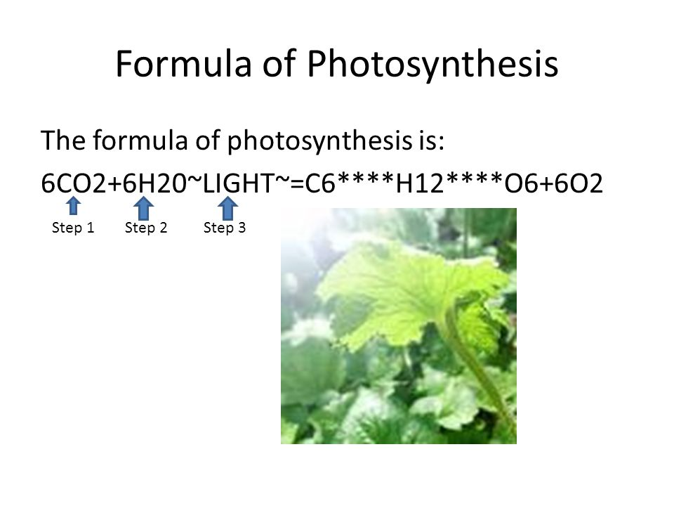 Formula of Photosynthesis