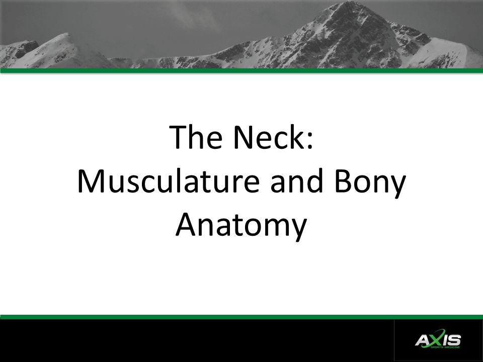 The Neck: Musculature and Bony Anatomy