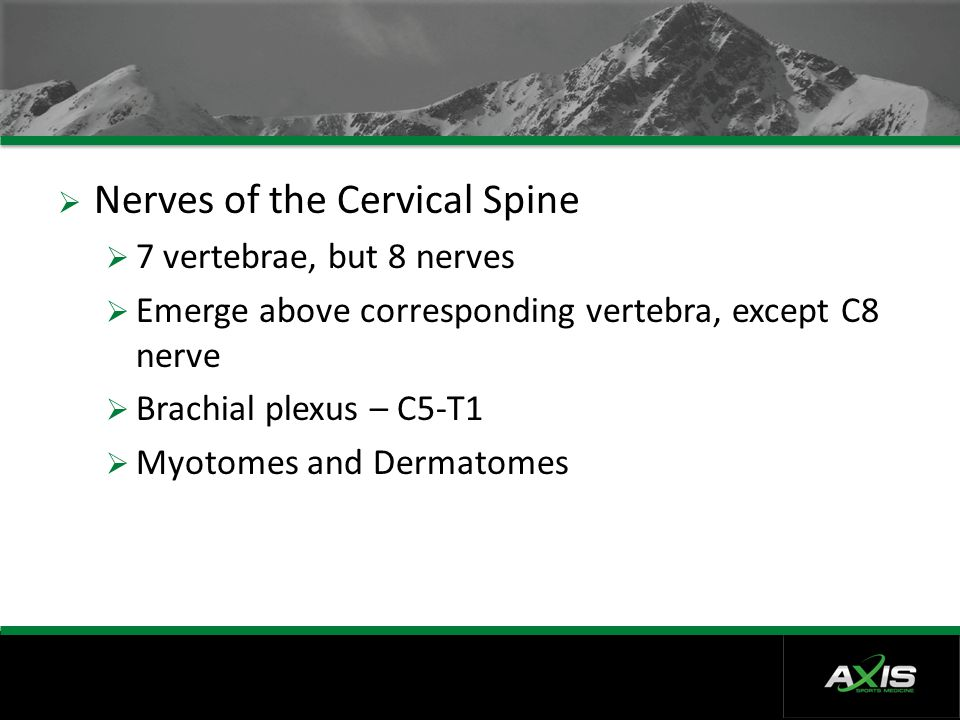 Nerves of the Cervical Spine
