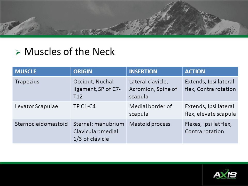 Muscles of the Neck MUSCLE ORIGIN INSERTION ACTION Trapezius