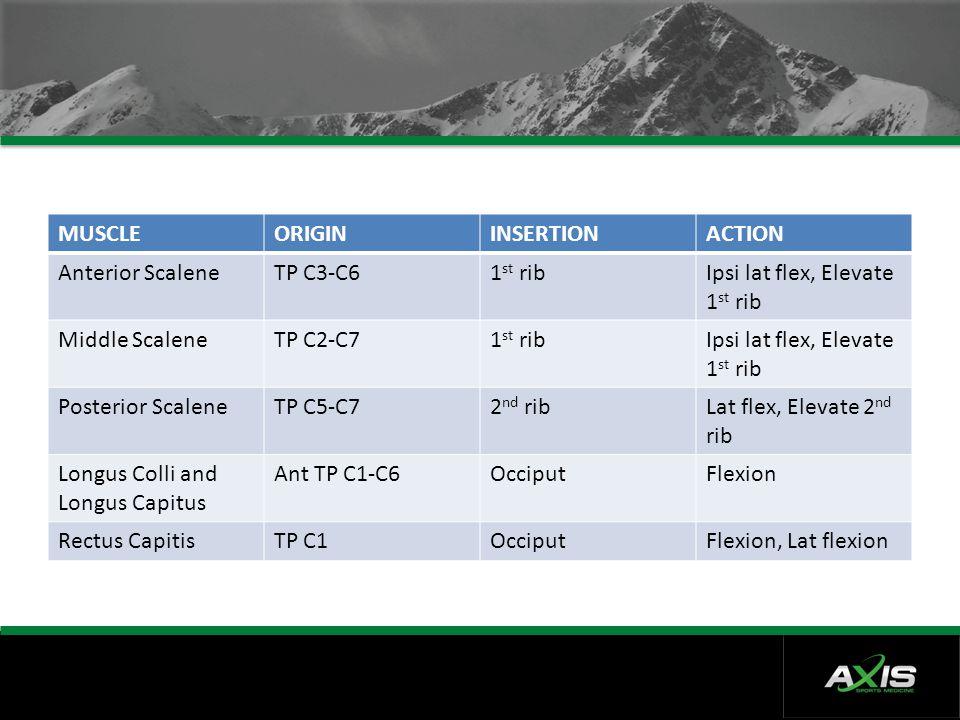 MUSCLE ORIGIN. INSERTION. ACTION. Anterior Scalene. TP C3-C6. 1st rib. Ipsi lat flex, Elevate 1st rib.