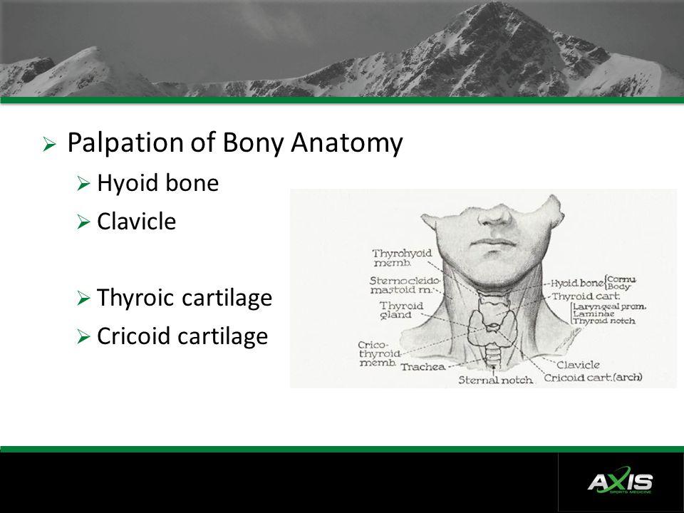 Palpation of Bony Anatomy