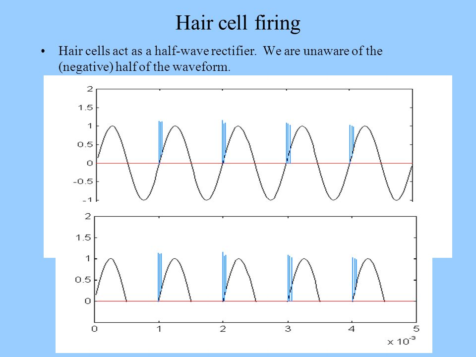Hair cell firing Hair cells act as a half-wave rectifier.