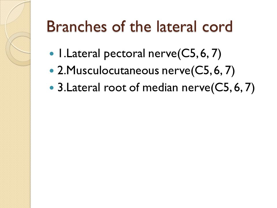 Branches of the lateral cord