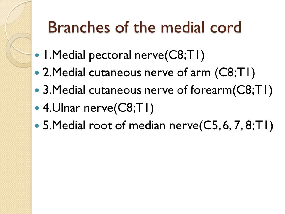 Branches of the medial cord
