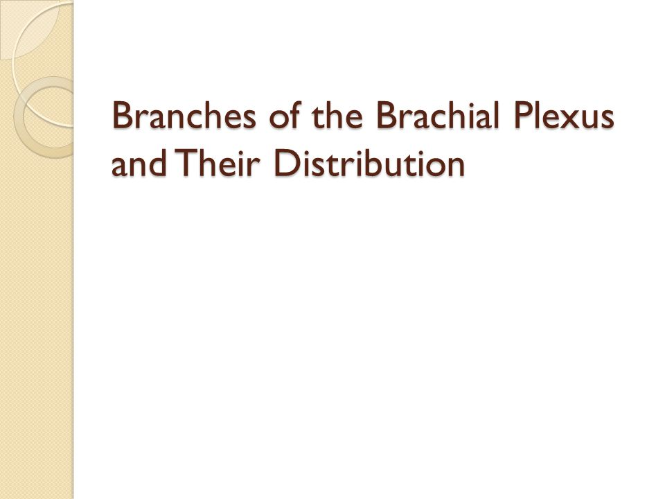 Branches of the Brachial Plexus and Their Distribution