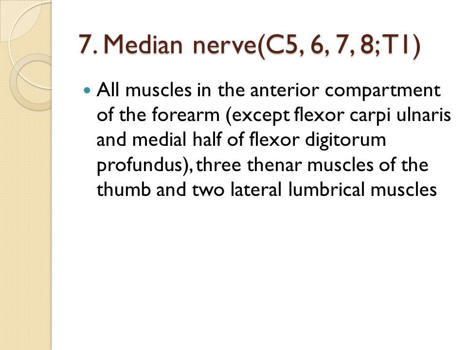 7. Median nerve(C5, 6, 7, 8; T1)