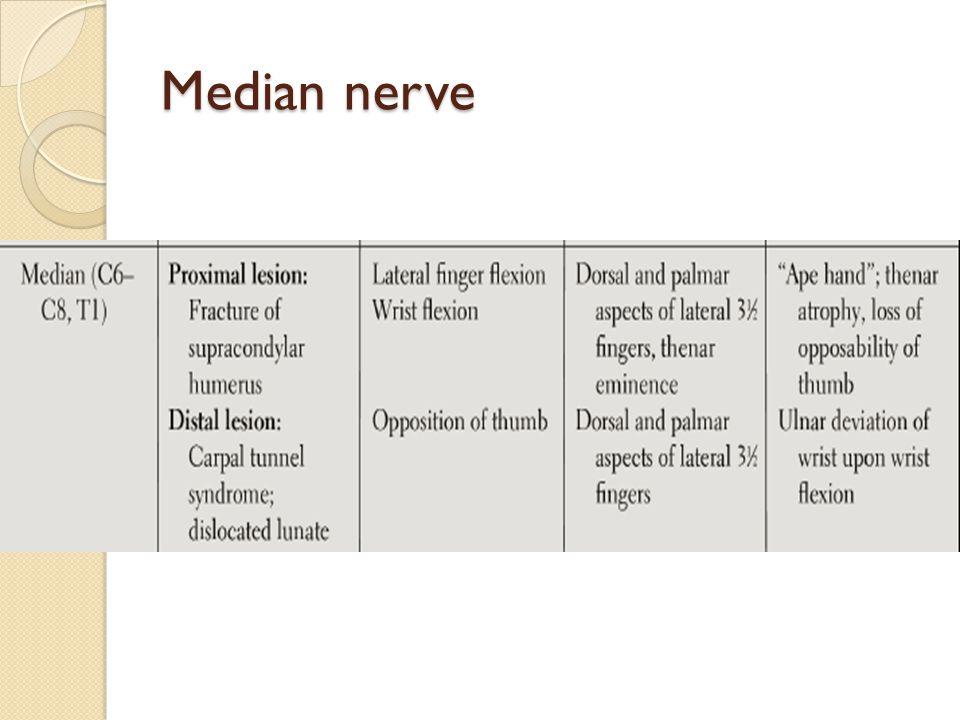 Median nerve