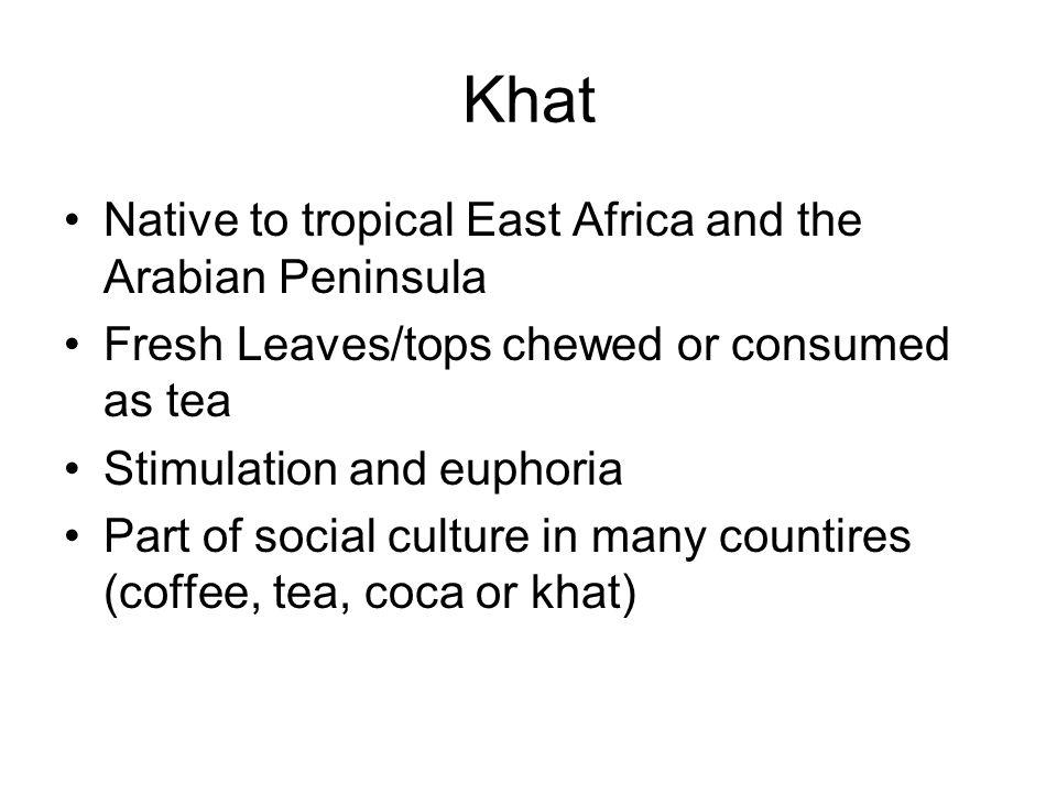 Khat Native to tropical East Africa and the Arabian Peninsula
