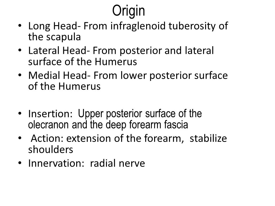 Origin Long Head- From infraglenoid tuberosity of the scapula