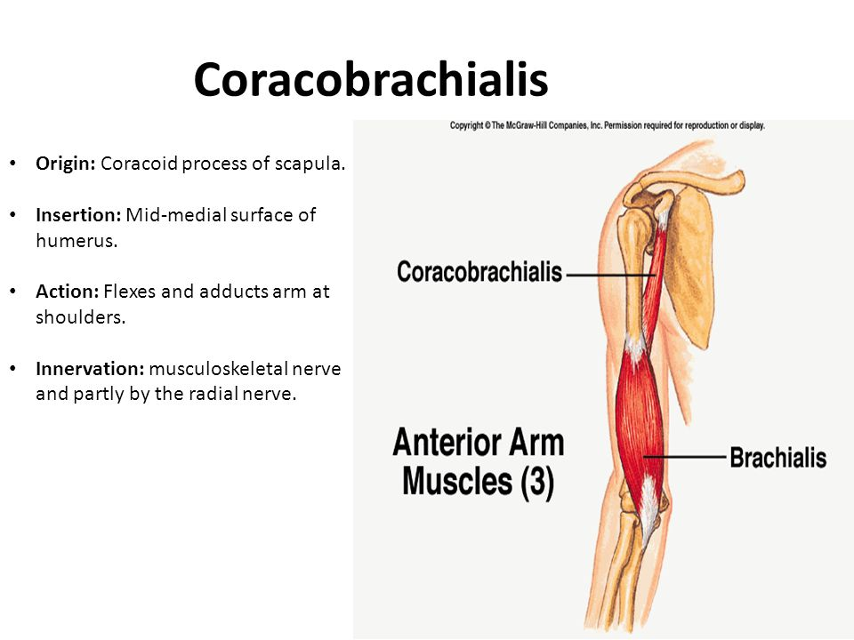Coracobrachialis Origin: Coracoid process of scapula.