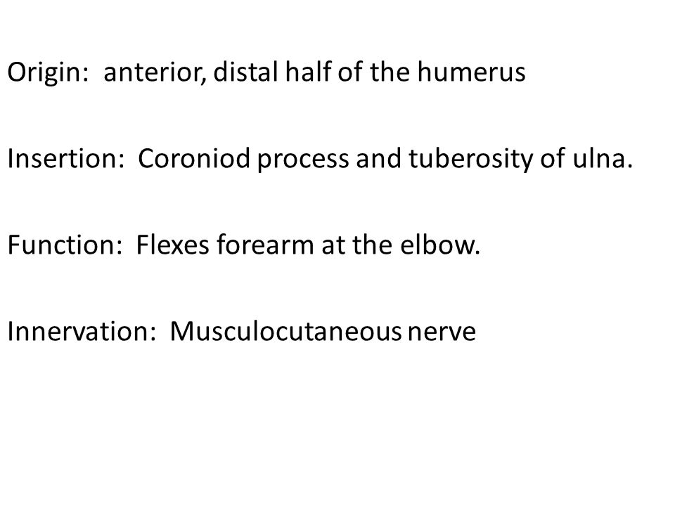 Origin: anterior, distal half of the humerus Insertion: Coroniod process and tuberosity of ulna.