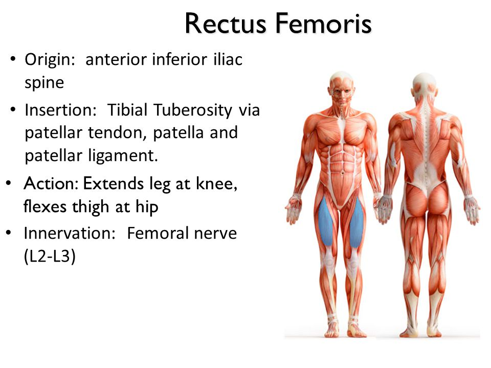 Rectus Femoris Origin: anterior inferior iliac spine