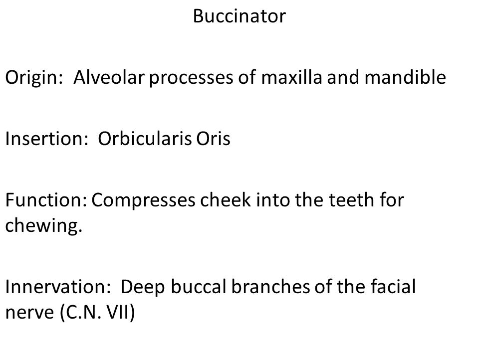 Buccinator Origin: Alveolar processes of maxilla and mandible Insertion: Orbicularis Oris Function: Compresses cheek into the teeth for chewing.