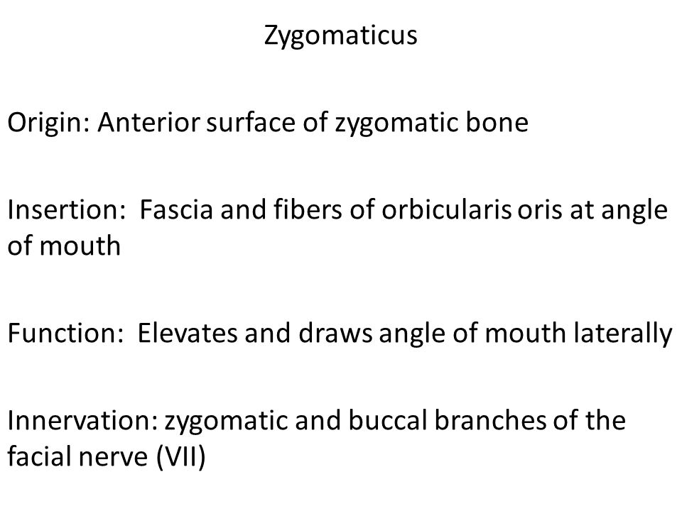 Zygomaticus Origin: Anterior surface of zygomatic bone Insertion: Fascia and fibers of orbicularis oris at angle of mouth Function: Elevates and draws angle of mouth laterally Innervation: zygomatic and buccal branches of the facial nerve (VII)