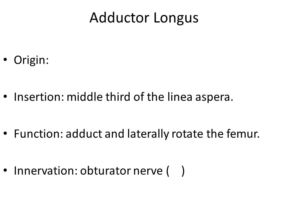 Adductor Longus Origin: Insertion: middle third of the linea aspera.