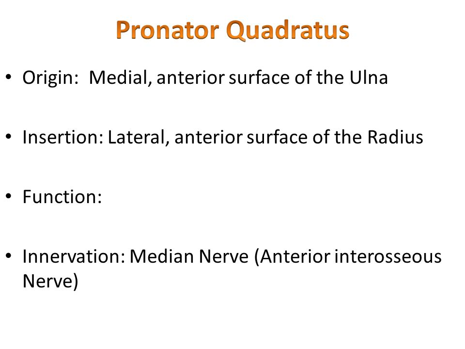 Pronator Quadratus Origin: Medial, anterior surface of the Ulna