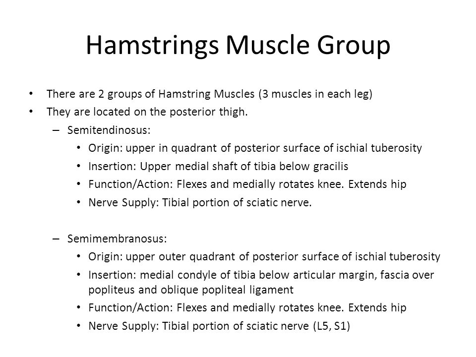 Hamstrings Muscle Group