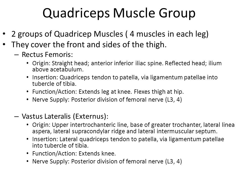 Quadriceps Muscle Group