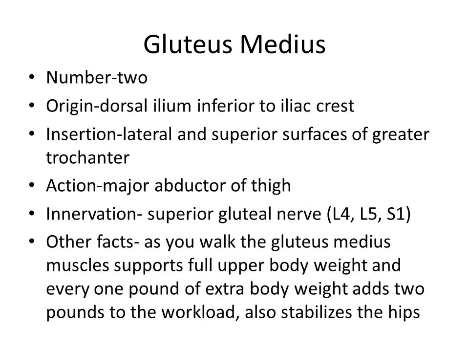 Gluteus Medius Number-two Origin-dorsal ilium inferior to iliac crest