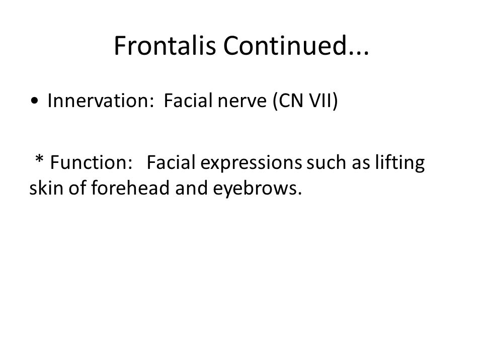 Frontalis Continued... Innervation: Facial nerve (CN VII)