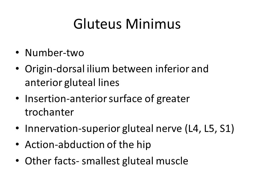 Gluteus Minimus Number-two