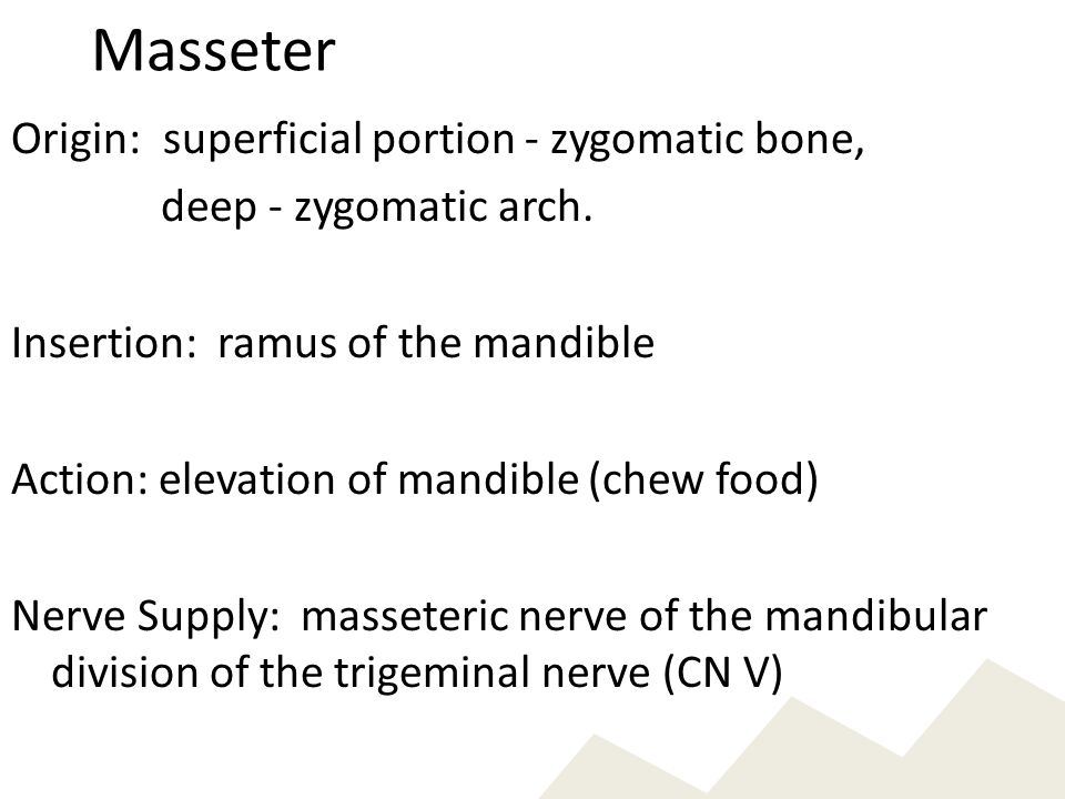 Masseter Origin: superficial portion - zygomatic bone,