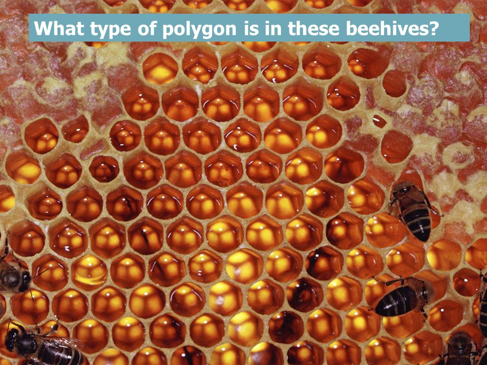 What type of polygon is in these beehives