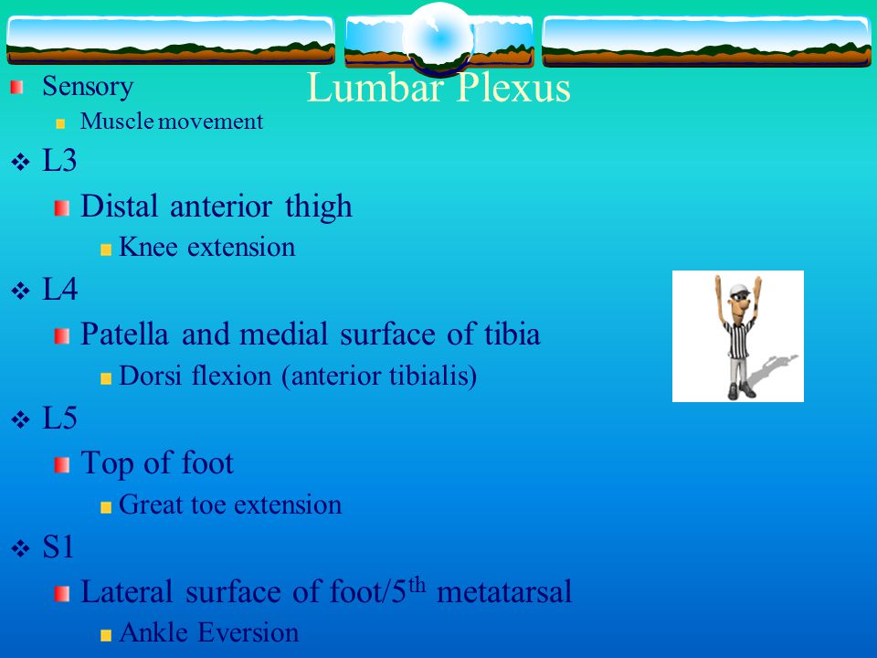 Lumbar Plexus L3 Distal anterior thigh L4