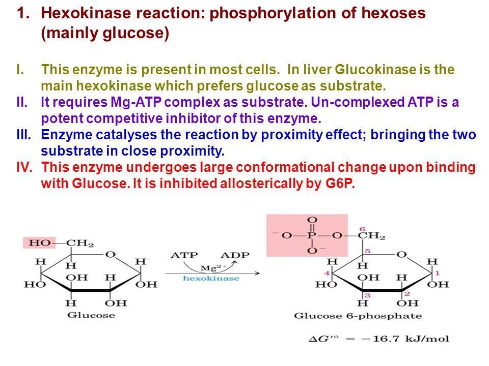 Hexokinase reaction: phosphorylation of hexoses (mainly glucose)