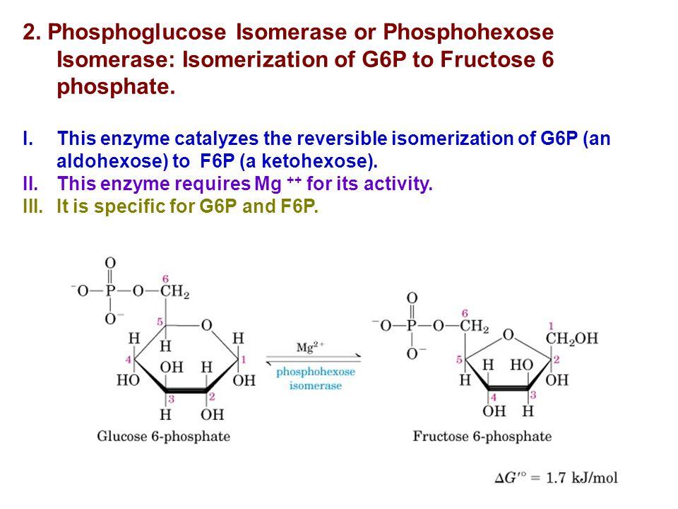 2. Phosphoglucose Isomerase or Phosphohexose Isomerase: Isomerization of G6P to Fructose 6 phosphate.