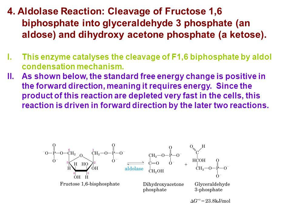 4. Aldolase Reaction: Cleavage of Fructose 1,6 biphosphate into glyceraldehyde 3 phosphate (an aldose) and dihydroxy acetone phosphate (a ketose).