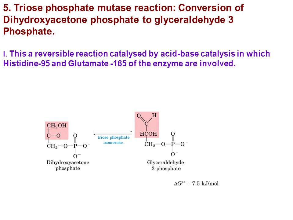 5. Triose phosphate mutase reaction: Conversion of Dihydroxyacetone phosphate to glyceraldehyde 3 Phosphate.