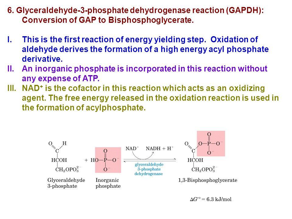 6. Glyceraldehyde-3-phosphate dehydrogenase reaction (GAPDH): Conversion of GAP to Bisphosphoglycerate.