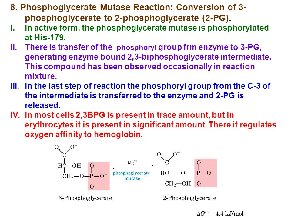 8. Phosphoglycerate Mutase Reaction: Conversion of 3-phosphoglycerate to 2-phosphoglycerate (2-PG).